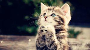 begging-kitten