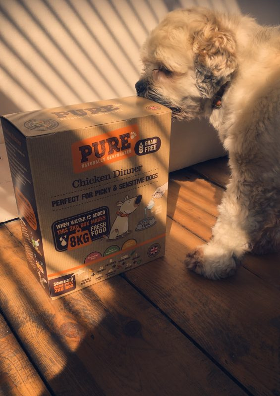 I And Love And You Wet Dog Food Review