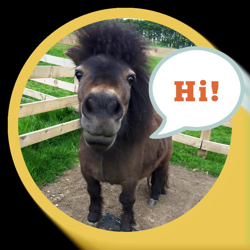Little-Alf-Says-Hello